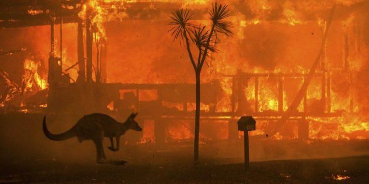 Ekosistemler Yangından Nasıl Etkilenir?